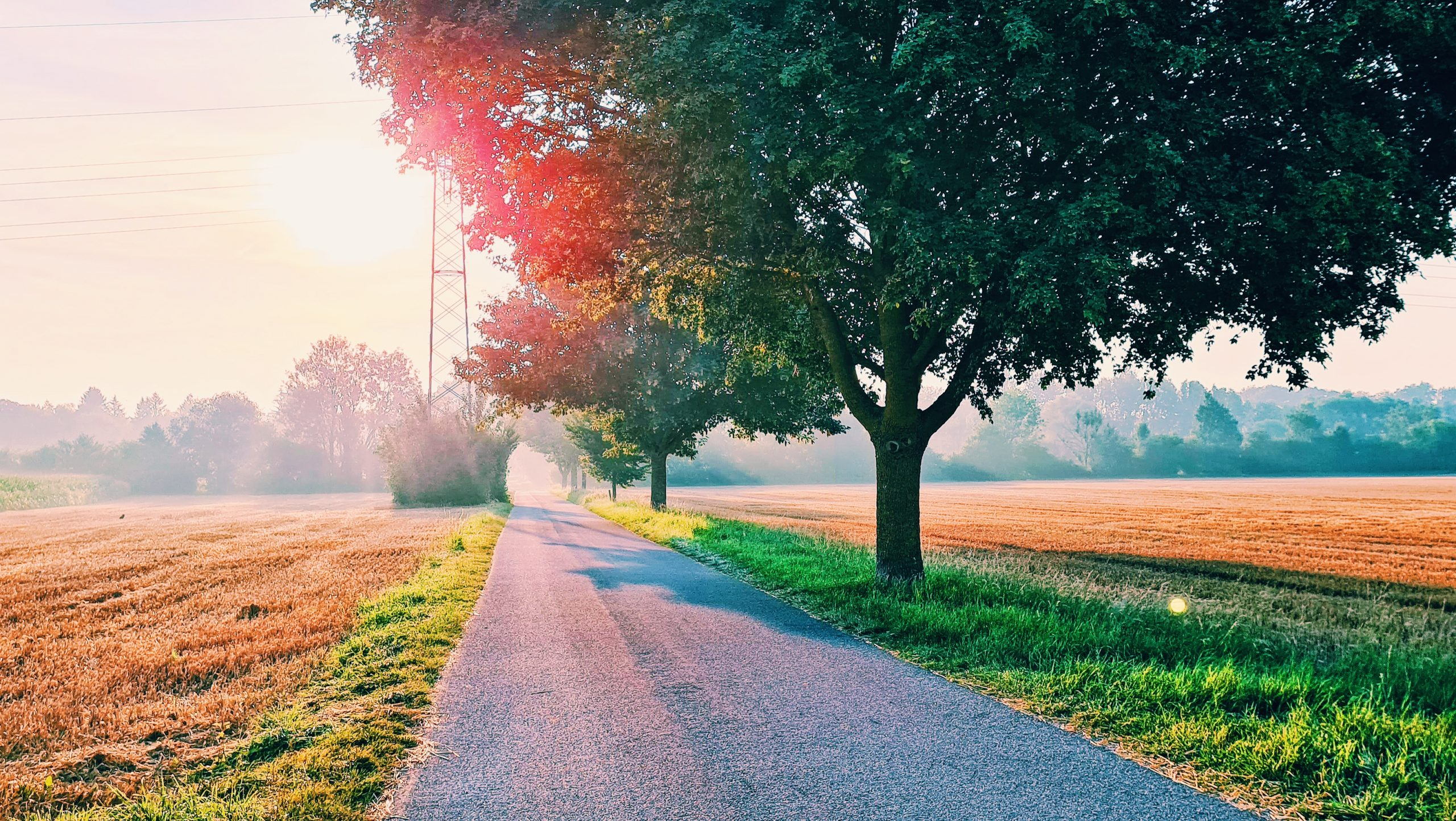 A sunrise appears low over the horizon with a long empty road ahead and a bright green tree in the foreground